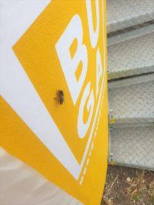 Nahaufnahme einer Biene, die auf dem neu gestrichenen BUGA Turm sitzt.